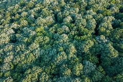 Лес воздушного взгляд сверху, взгляд леса сверху Стоковые Изображения RF