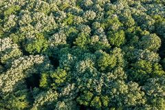 Лес воздушного взгляд сверху, взгляд леса сверху Стоковые Фотографии RF