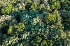 Лес воздушного взгляд сверху, взгляд леса сверху Стоковое Фото