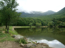 Лес вокруг озера с горой стоковые изображения rf