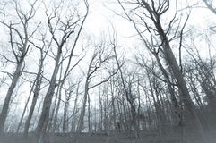 Лес во время зимы стоковое фото rf