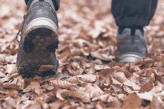 Лес выходит идти человека Листво осени Стоковые Фотографии RF