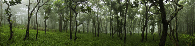 Лес в ландшафте панорамы весеннего времени Стоковое Изображение RF