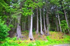 Лес в Аляске, США Стоковая Фотография