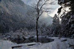 Лес в баварских Альпах Стоковое Изображение RF