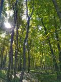 Лес в Венгрии Стоковые Изображения