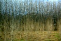 Лес в движении стоковые изображения rf