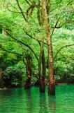 Лес в воде Стоковое Изображение