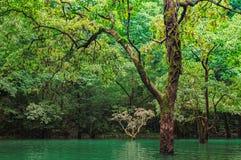 Лес в воде Стоковые Изображения RF
