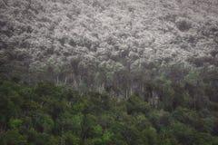 Лес в горах со снегом на верхних частях деревьев стоковое изображение rf