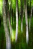 Лес в горах Стоковая Фотография