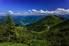 Лес в горах Стоковая Фотография RF