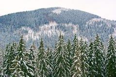Лес в горах стоковое фото rf