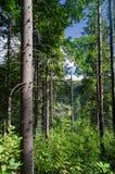 Лес в горах стоковые фотографии rf