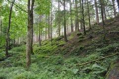 Лес в гористых местностях Шотландии Стоковая Фотография