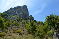 Лес в горных областях в Transilvania, (7) Стоковое фото RF