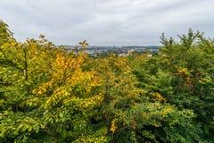 Лес в Гданьске Стоковые Изображения