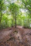 Лес в Гданьске Стоковое Изображение RF