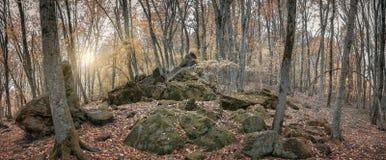 Лес в долине ослицы реки, Кавказ осени, Россия стоковая фотография rf