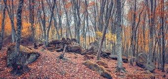 Лес в долине ослицы реки, Кавказ осени, Россия стоковая фотография