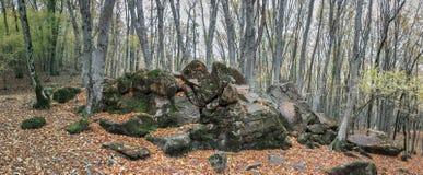 Лес в долине ослицы реки, Кавказ осени, Россия стоковое изображение rf