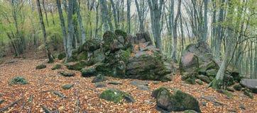 Лес в долине ослицы реки, Кавказ осени, Россия стоковое фото