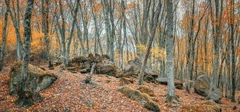 Лес в долине ослицы реки, Кавказ осени, Россия стоковое изображение