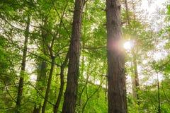 Лес в лете стоковые изображения rf