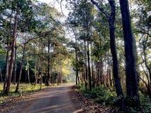 Лес в зиме утра стоковые изображения rf