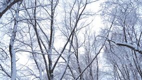Лес в зиме видеоматериал