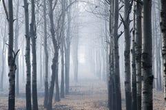 Лес в зиме Стоковые Фото