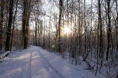 Лес в зиме стоковые изображения rf