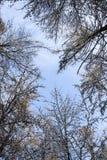 Лес в зиме стоковое изображение rf