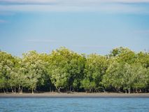 Лес в зоне Tanintharyi, Мьянма мангровы Стоковая Фотография