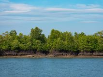 Лес в зоне Tanintharyi, Мьянма мангровы Стоковое фото RF