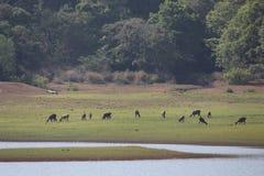 Лес в Керале стоковое изображение