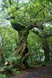 Лес в монастыре Inchmahome Стоковые Фото
