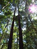 Лес в национальном парке Noosa стоковое изображение rf