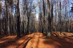 Лес в ноябре Стоковое Изображение