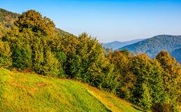 Лес в оранжевой листве на солнечный день осени Стоковые Изображения