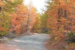 Лес в осени стоковое фото rf