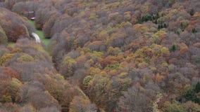 Лес в осени на держателе Cucco в Умбрии в Италии сток-видео
