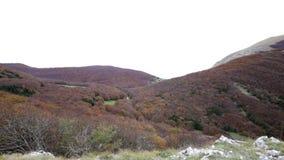 Лес в осени на держателе Cucco в Умбрии в Италии видеоматериал