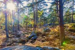 Лес в осени с пирофакелами объектива стоковое фото