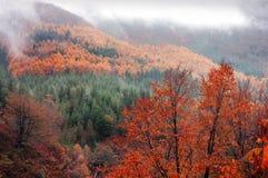 Лес в осени с яркими цветами Стоковое фото RF