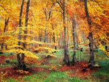 Лес в осени с яркими цветами Стоковое Фото
