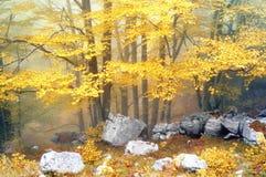 Лес в осени стоковое фото