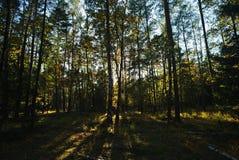 Лес в осени sunlit солнечным светом Стоковые Изображения
