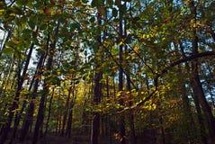 Лес в осени sunlit солнечным светом Стоковое Изображение