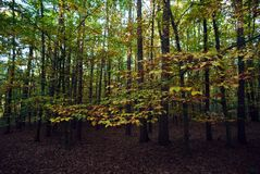Лес в осени sunlit солнечным светом Стоковое фото RF